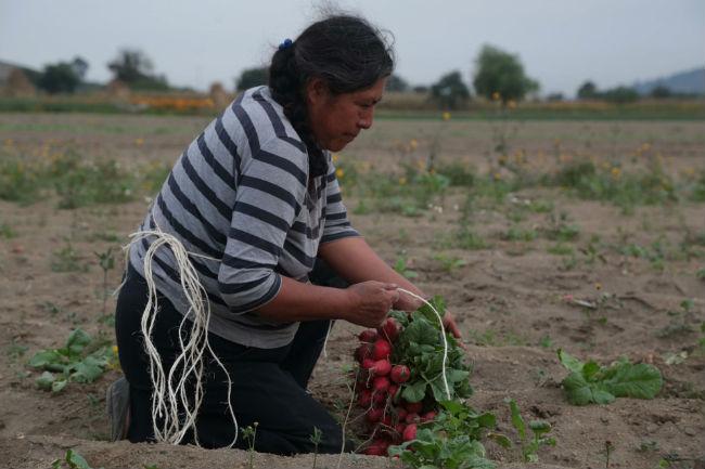 FIRA prevé incremento de crédito para el sector agropecuario poblano