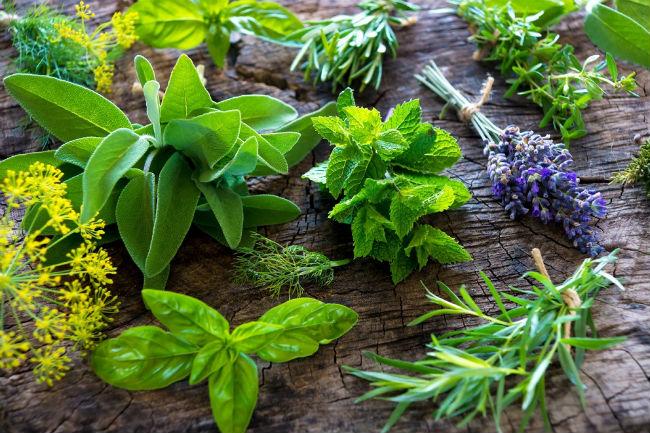Existen plantas medicinales para combatir la obesidad