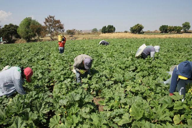 Zona agrícola de la Los Reyes de Juárez integrará corredor para fomentar la  cultura - Revista la Campiña